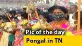 Image of the day: Pongal celebrated with fervour in Tamil Nadu