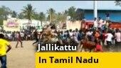 Cop injured after Jallikattu bull throws him in air in TN's Vellore