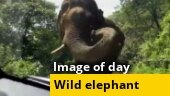 Image of the day: Close encounter with wild elephant in Kerala | Watch