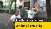 Delhi YouTuber makes pet dog fly using balloons in viral video, arrested   WATCH