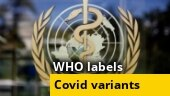 WHO assigns labels to Covid variants, strain first detected in India to be called 'Delta'