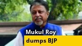 Mukul Roy returns to TMC: Will more BJP chips fall in Bengal?