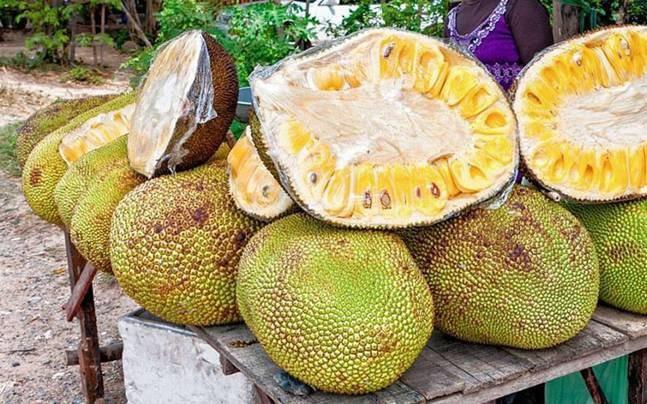 Unique variety of jackfruit found in Chelur village in Karnataka. Picture for representation