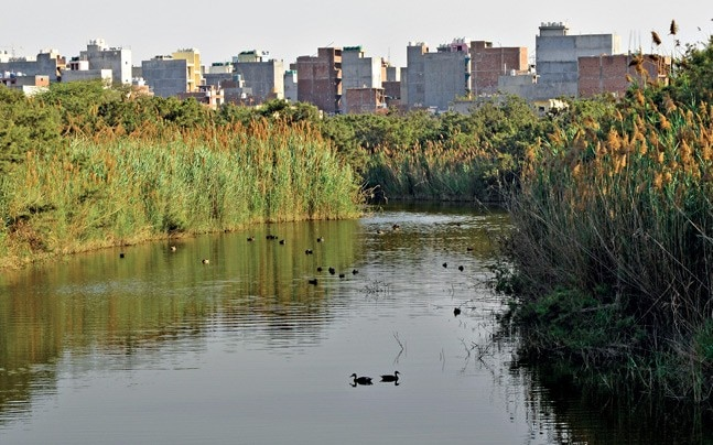 The 157-acre YAMUNA BIODIVERSITY PARK is a reminder of what wilderness along the river once looked like. Photo: Chandradeep Kumar