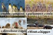 Collective nouns and their proper use: List of important collective nouns