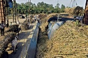 Maharashtra: Addicted to sugar