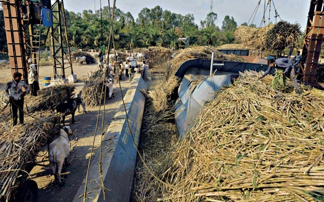 CRUSHED Farmers with their cane at the Natural Sugar Factory, Latur. Photo: Milind Shelte