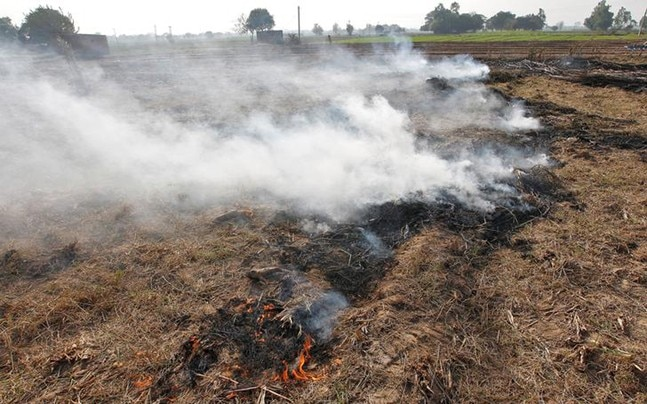People die in road accidents after stubble burning in Punjab and Haryana