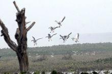 New arrivals at Okhla bird sanctuary