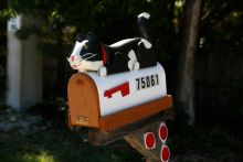 cat-shaped mailbox