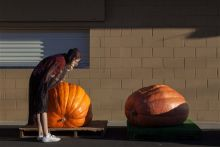 Annual heavy weight Pumpkin contest