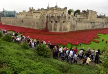 Creation of a ceramic poppies art installation