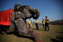 Elephant beauty contest