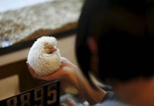 A woman holds a hedgehog at the Harry hedgehog cafe. The cafe's name Harry alludes to the Japanese word for hedgehog, harinezumi.