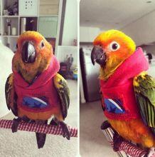 Cute pet fashion