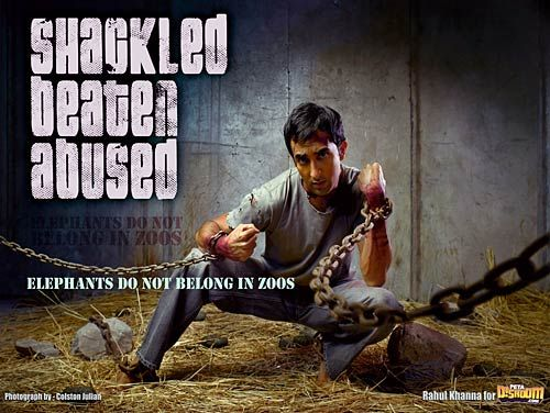 Rahul Khanna in PETA advertisement