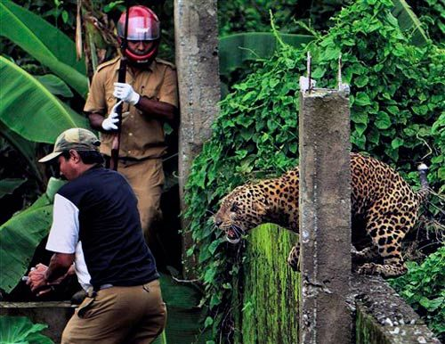 Leopard attacks forest guard