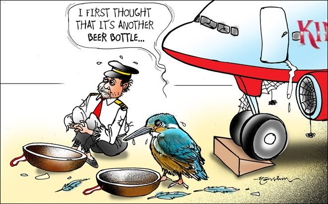 Kingfisher crisis