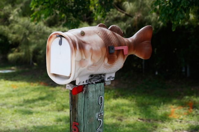 Fish-shaped mailbox