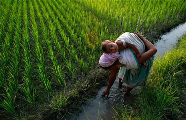 Woman works in paddy field while carrying her baby