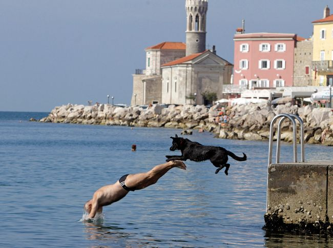 man jumps into sea with dog