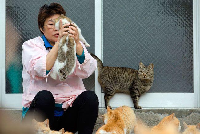 Cats on Aoshima Island