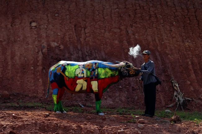 Buffalo body-painting competition