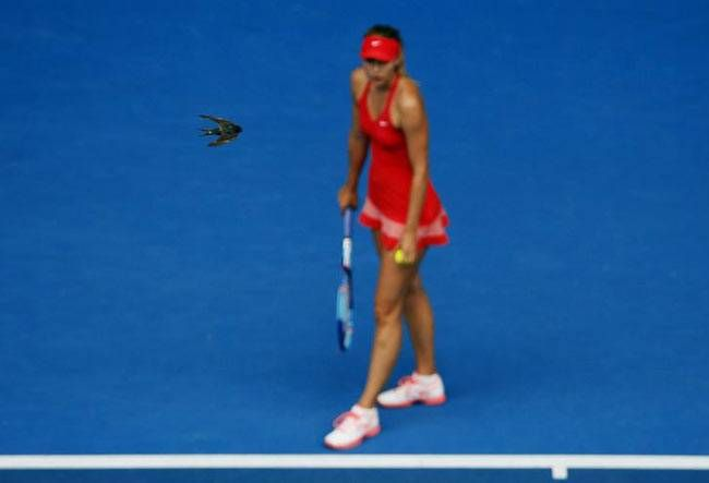 Bird flies above Maria Sharapova