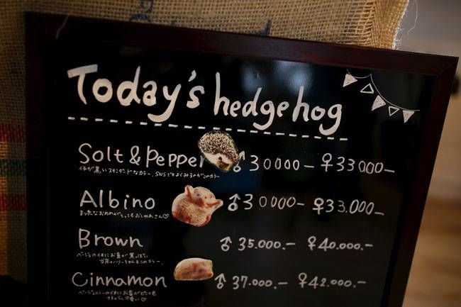 A board shows a selection of hedgehogs for sale at the Harry hedgehog cafe.