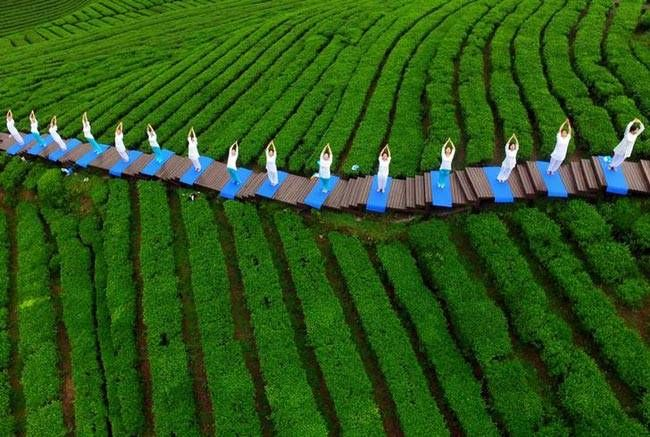 Yoga finds haven in middle of a tea plantation this International Yoga Day.