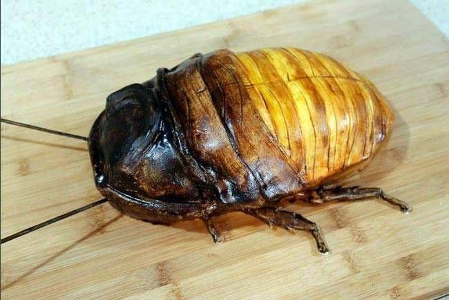 Dey's latest creation is a creepy-crawley Madagascar Hissing Cockroach.