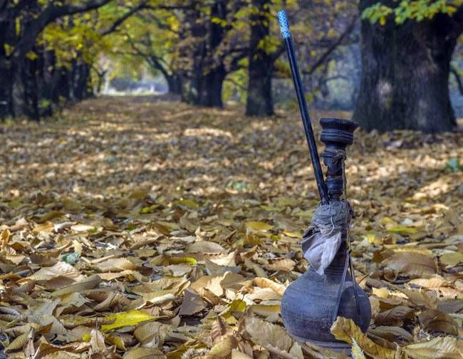 According to horticultural data, there were 42,000 Chinar trees in Kashmir during the 1970s. But the number depleted to 5,000 by the turn of the century. Even with 14,000 more being planted since, the number of full-grown Chinar trees remains quite less.
