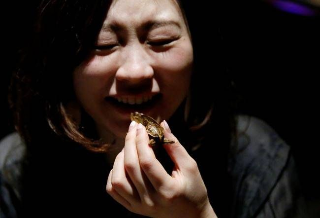 A customer tries to take a bite of a crispy water bug.