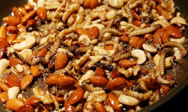 Mealworm and nut brittle--this is one of the many dishes on offer at this Tokyo bar.