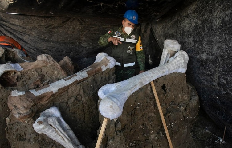 Mexican Army Captain and Engineer Jose de Jesus Cantoral Herrera shows a mammoth skeleton discovered during the construction of Mexico City's new airport at Santa Lucia military base in Mexico, Thursday, September 3, 2020