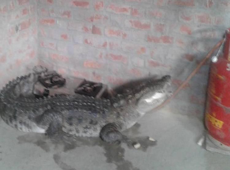 crocodile_092119011630.jpg