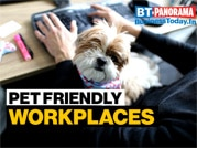 India Inc embracing pet-friendly workplaces