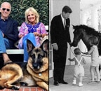 Biden's Major and Champ, Obama's Bo and Sunny: Meet pets of White House