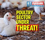 Bird flu impacts poultry sector, sales down
