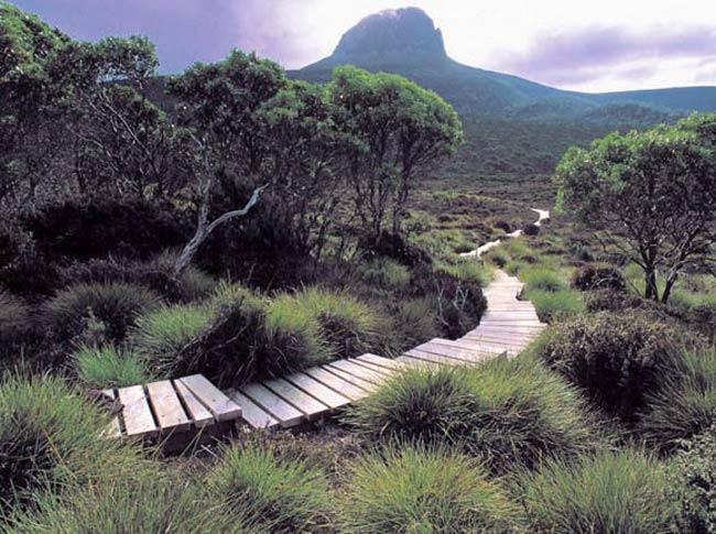 Tarkine, Tasmania