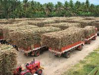 Sugarcane lorries