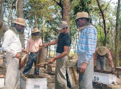 Bee-keepers at work: Workers at a bee farm extracting honey from honeycombs