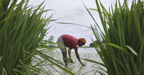 Jaitley's Budget gives big push to agriculture