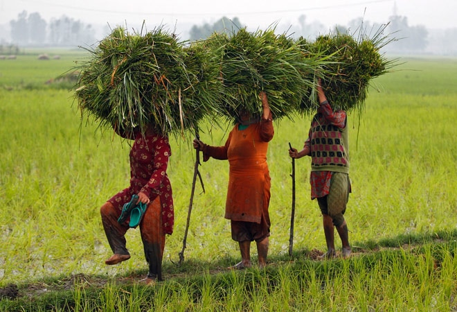 NSSO farm indebtedness data: Big worry for Andhra, Telangana
