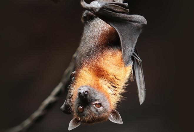 SARS-CoV-2 related coronaviruses circulating in bats, pangolins