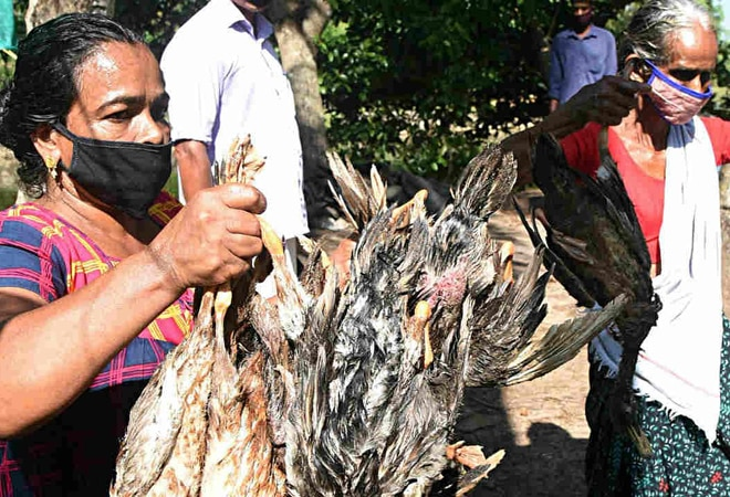 Bird flu: Centre asks states to prepare for any eventuality; allay people's fears