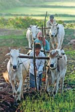 Agriculture top agenda for FM