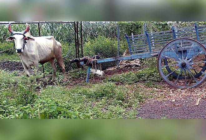 Over-zealous cops impose traffic fine on bullock cart in Uttarakhand