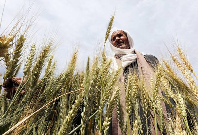 Government procures 55.17 lakh tonne of wheat in 2019