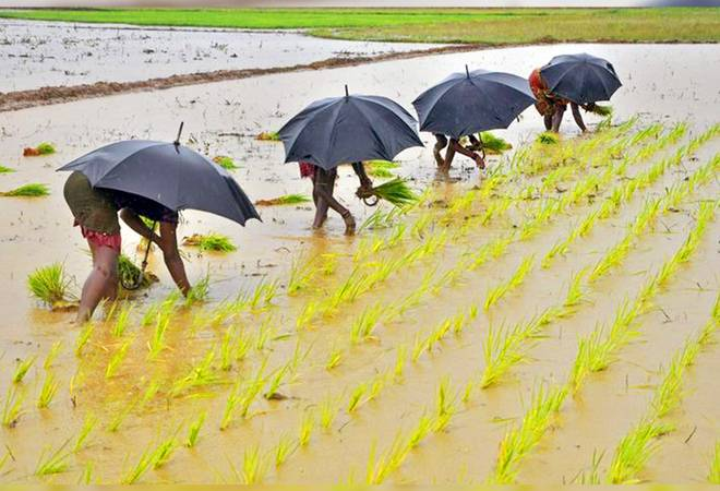 IRDAI asks insurers to give crop insurance claim details in vernacular languages